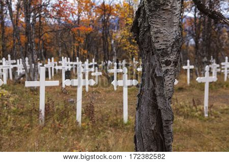 Colorful cemetery in autumn, fall. Birch trunk this side the white crosses.