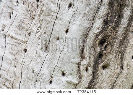 Inside Bark Tree Texture
