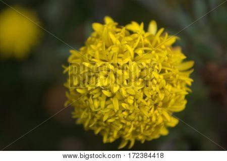 close up flower dandelion in the garden