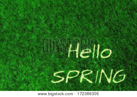 Green grass natural background. hello spring
