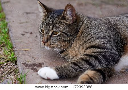 Striped cat lying on sand in open air