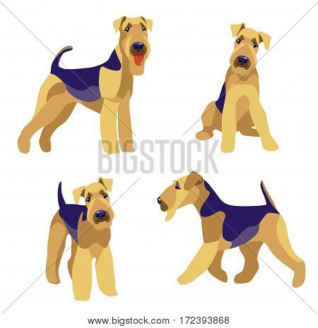 Airedale Terrier dogs set on a white background vector illustration