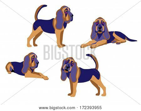 Bloodhound dogs set on a white background vector illustration