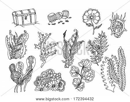 Set of seaweed. Vector image in black and white. chest