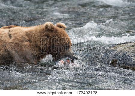 Alaskan Brown Bear Silhouetted Against Mount Katolinat, Alaska  № 1442498 бесплатно