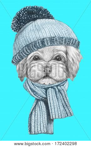 Portrait of Havanese with hat and scarf. Hand drawn illustration of dog.