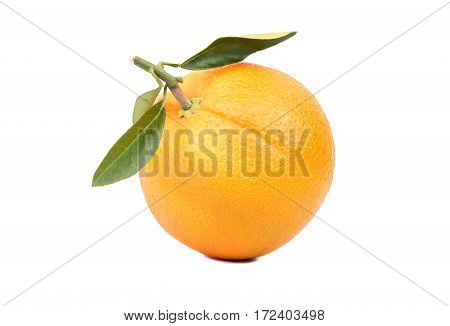 Fruit Orange With Leaves
