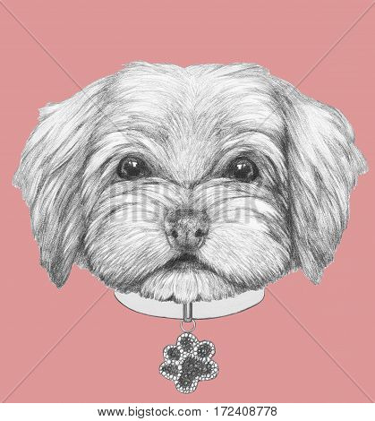 Portrait of  Havanese with dog-collar. Hand drawn illustration.