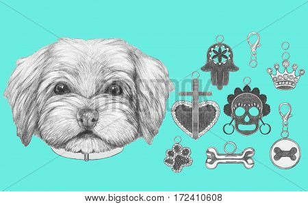 Portrait of  Havanese with dog-collar and collection of pendants. Hand drawn illustration.