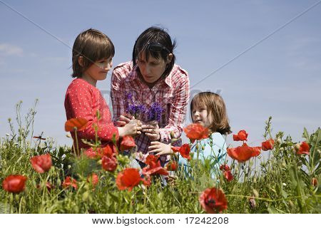 mother and children and the corm poppy