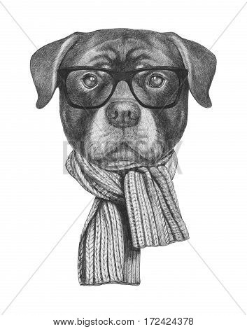 Portrait of Rottweiler with scarf. Hand drawn illustration.