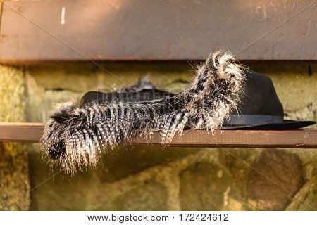 Stylish clothes lying on bench outdoor. Outfit of elegant fashionable woman. Fur vest and black hat outside.