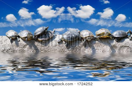 You Still Work In Office? Even Turtles Already Sunbathe On The Sea!