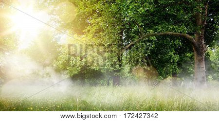 countryside landscape; morning forest field and blooming grass