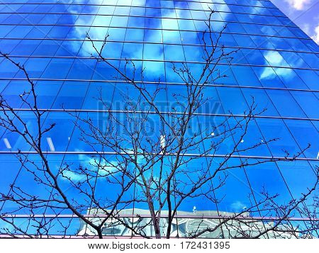 glass building reflecting the sky and bare winter branches