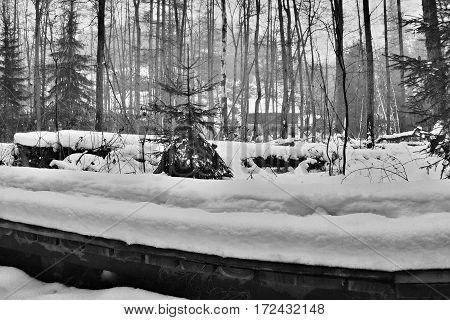 new forest footway in Peklo valley in Machuv kraj region in winter Czech republic