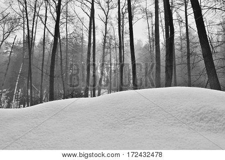 trees behind snow dune in Peklo valley in Machuv kraj region during winter Czech
