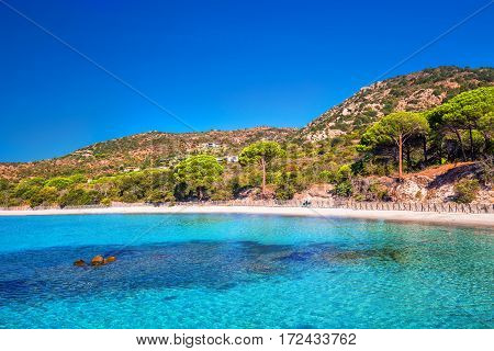 Sandy Palombaggia beach with pine trees and azure clear water Corsica France Europe.