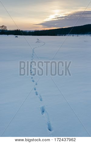 animal tracks in the snow on a winter setting sun