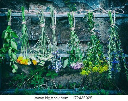 Bunches Of Healing Herbs - Mint, Yarrow, Lavender, Clover, Hyssop, Calendula, Milfoil, Herbal Medici