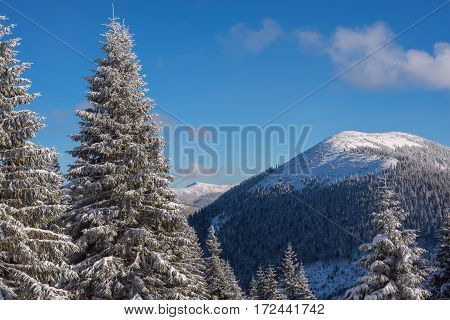 Winter Landscape With Snow Covered Pine Trees And Mountains On The Horizon