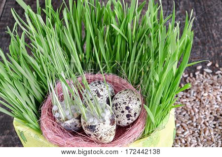Nest with quail eggs in a pot with grass, wooden background