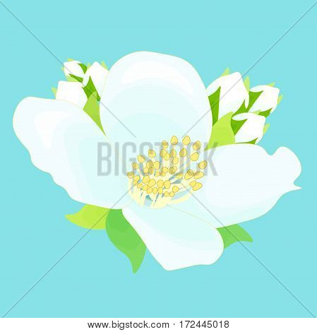 Beautiful Jasmine Flower With Buds. Vector Illustration