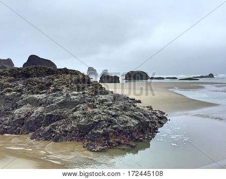 Crustacean Covered Coastal Rocks in Northwest Oregon