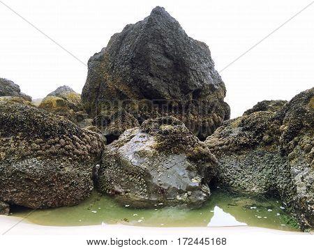 Sea Life Covered Boulders on the Oregon Coast