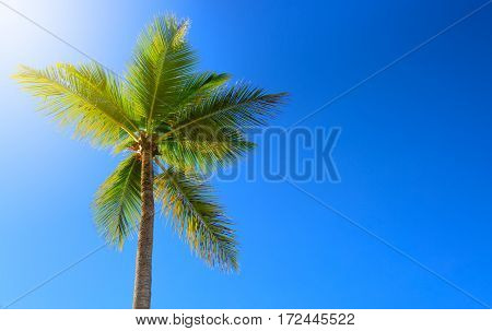 Palm tree and sun, tropical sunshine in the Caribbean.