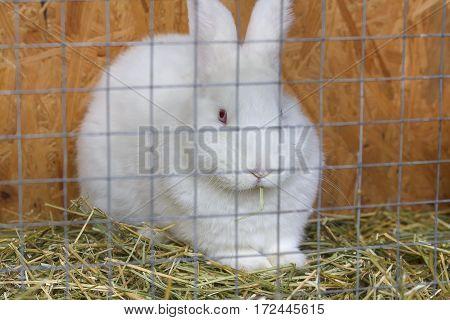 White rabbit sitting in a cage. Animals