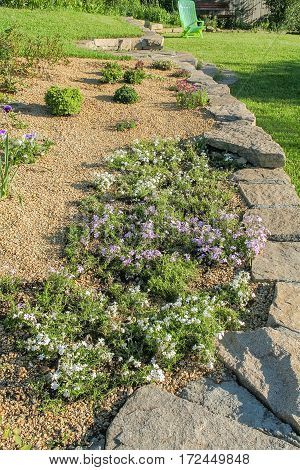 Fragment of the alpine slide with flowering phlox subulate in the summer garden in evening sun close-up