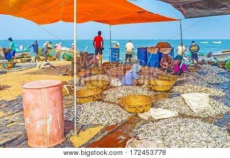 The Anchovies Processing