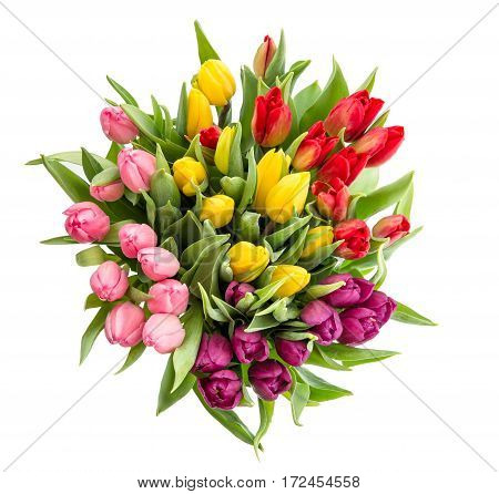 Tulip flower isolated on white background. Bouquet of fresh multicolor flowers