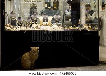 ISTANBUL TURKEY - DECEMBER 28 2015: Ginger cat in front of a Jewelry store in the Grand Bazaar