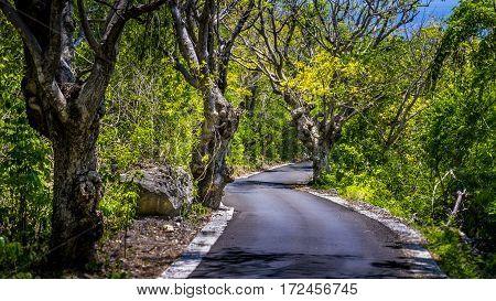 Narrow Road between Bizarre Trees on Nusa Penida Island, Bali Indonesia.
