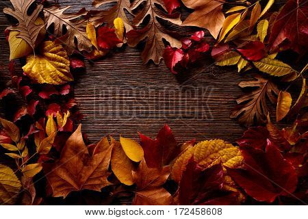 Autumn fall frame golden red leaves on wood background copy space