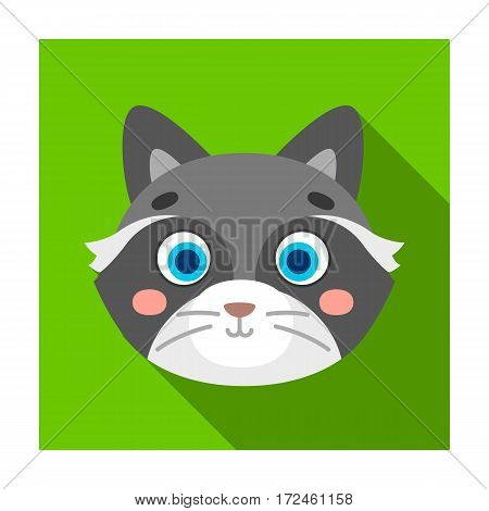 Raccoon muzzle icon in flat design isolated on white background. Animal muzzle symbol stock vector illustration.