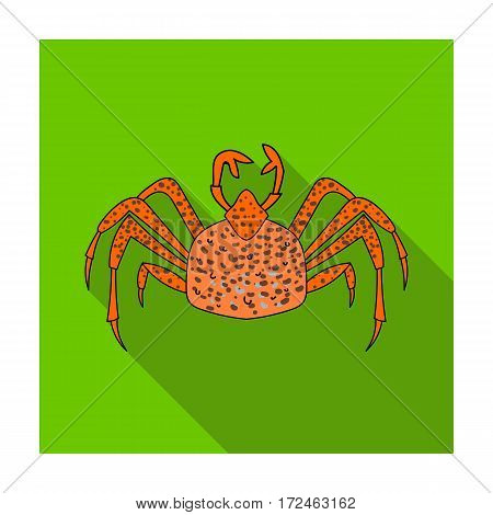 King crab icon in flat design isolated on white background. Sea animals symbol stock vector illustration.