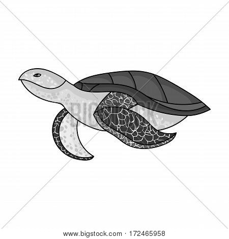 Sea turtle icon in monochrome design isolated on white background. Sea animals symbol stock vector illustration.