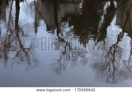 Reflection of trees on the water surface of a lake.