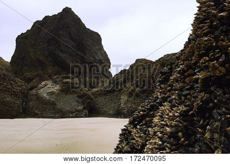 Mussel Covered Rock on the Pacific Coast of Oregon