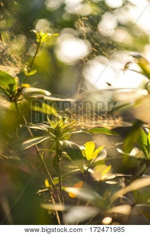 Close-up of a mysterious spider net. spider webs, Sensitive Focus