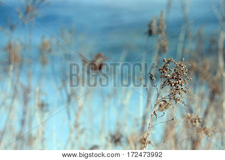 Beautiful blue water is the background to a spring field of dried plants.