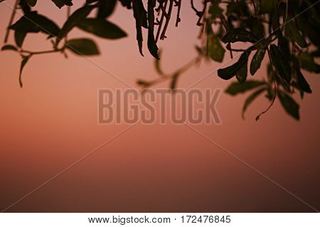 Fiery sky sunset and silhouette leaves abstract background soft focus