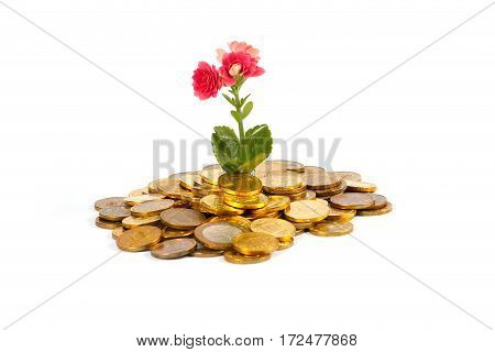 beautiful green sprout and flower on a pile of Russian metal coins of gold color