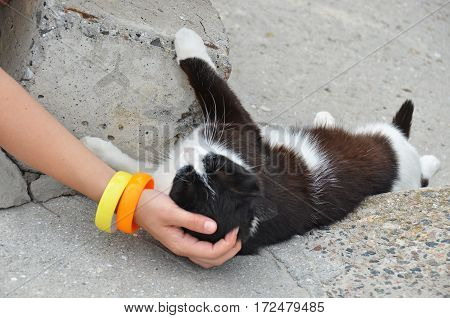 Woman Caress Stray Cat
