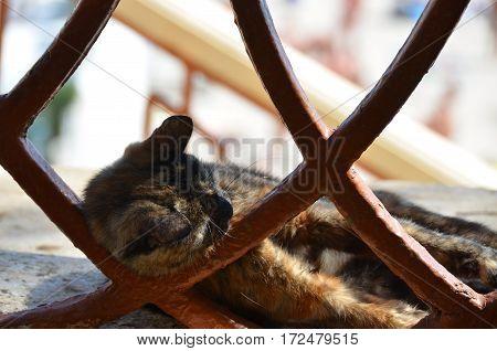 Cat Rest On Street