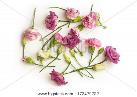A photo of tender pink carnation flowers and buds, shot from above on a white background with copy space