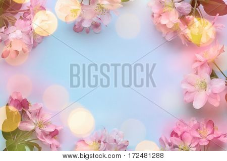Spring flower with lights,Copy space for your text.